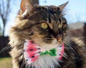 Watermelon bow tie for cat, watermelon cat collar, summer cat bow tie, summer cat collar, watermelon cat costume, kitten bow, kitten collar