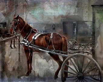 Amish Photography, Horse and Buggy Photography, Brown Horse, Black Buggy, Green Gray Texture, Farm, Mennonite Horse with Buggy, Market Art