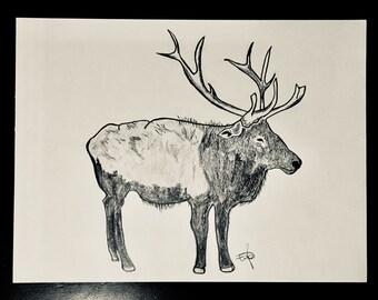 Original Elk Pencil Sketch Drawing