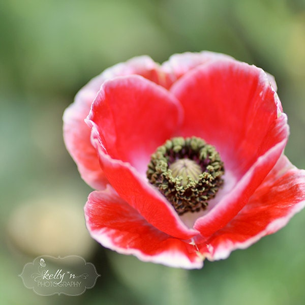 Poppy flower photography red poppy flower photography heart zoom mightylinksfo Choice Image