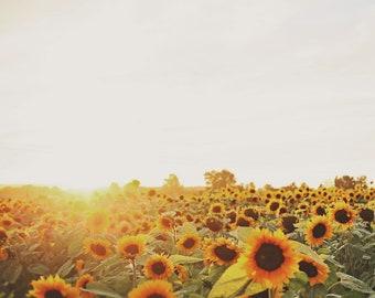 Sunflowers, sunflower field, Matte, digital download, sunshine, summer time