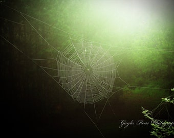 Spider Web Photography,Nature Photography,Insect Photography,Pond Life Photos,Morning sun on Spider Web,Dew on Spider Web,woodland,green