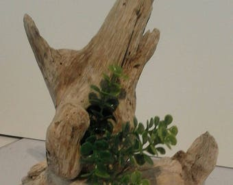 Small decoration Driftwood