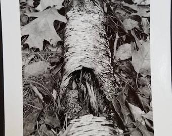 Autumn Log, fine art photographic print