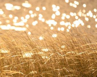 Autumn photography wild grass maize yellow honey gold fall photo sparkling water bokeh sunlight ochre curry - Seeing Spots 8x10