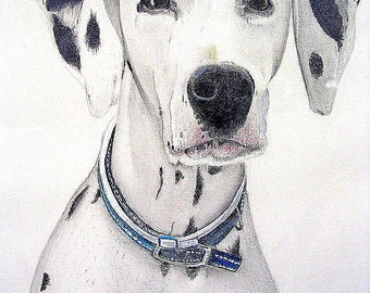 Dalmation, Original Drawing