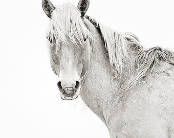 Wild Horse Photography, Black and White horse photo, Portrait of a palomino wild horse stallion with wind blowing in mane, Carrot Island