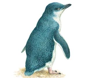 Little Penguin, bird paintings,Fairy Penguin, limited editions,