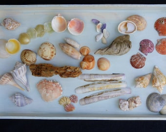 Shell Display with Shells and Tray