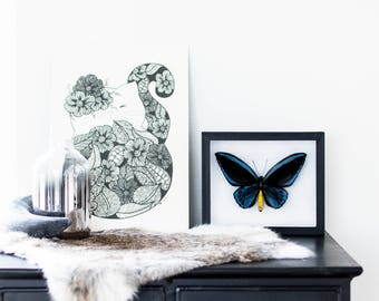 Real framed butterfly: Ornithoptera priamus urvilleanus // VERY RARE // birdwing butterfly