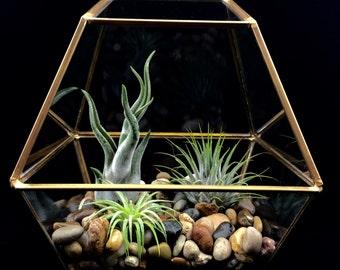 Air Plant Terrarium Kit, Geometric Gold Terrarium, River Stones