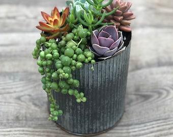 Succulent Arrangement - Corrugated Metal