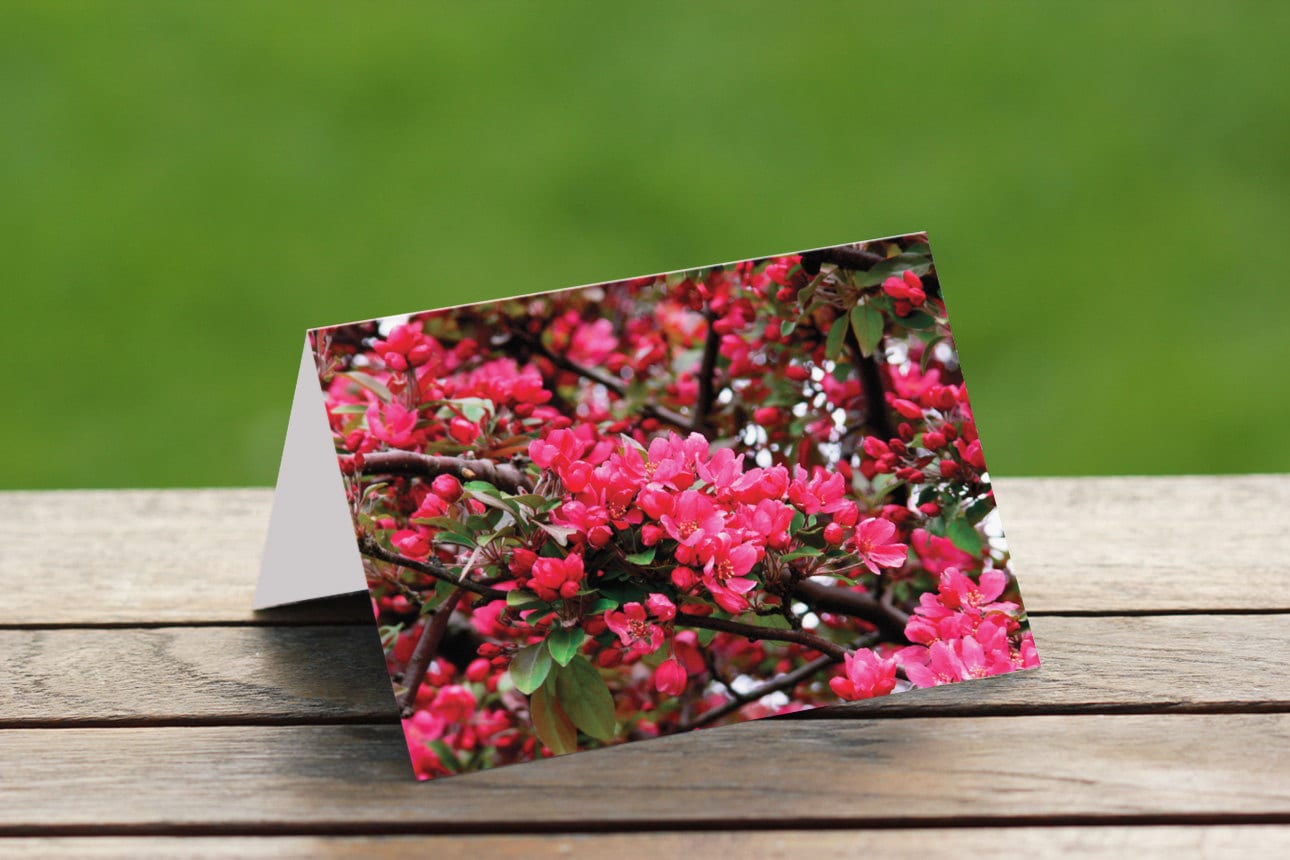 Cherry Blossoms Blank Note Card Greetings Cards Nature