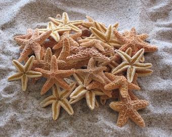 "Mini Sugar Starfish 1 - 2"" (6 PC)  - Starfish - Seashells - Seashell Supply - Craft Seashells - Coastal Home Decor - Beach Decor"