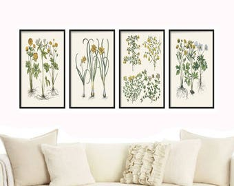 Botanical Print Set - Botanical Illustration - Botanical Print - Farmhouse Decor - Prints - Wall Print  - Vintage Print - Home Decor - Art