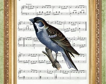 Bird Sheet Music Art Print Wall Decor Vintage Dictionary Print Dictionary Prints Book Page Art