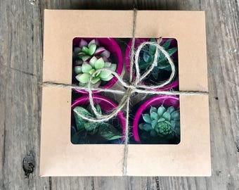 Magenta succulents gift box of 4