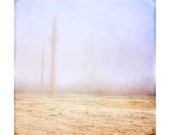 Art Print: Misty morning wall art. Mist, fog, forest, trees, frosty photo print, textured print