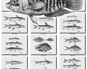 FISHES-49-bw Collection of 177 vintage images terrarium engravings ancient pictures High resolution digital download printable water animals