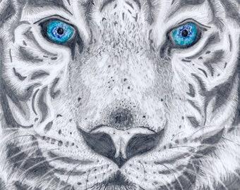 White Tiger, Pencil Drawing