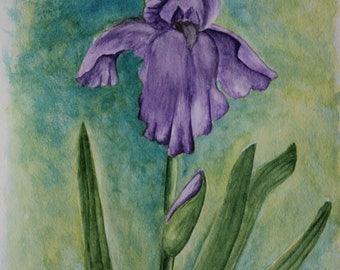 Bearded Iris, Original Watercolor Painting, Watercolor on Paper, Flower Painting