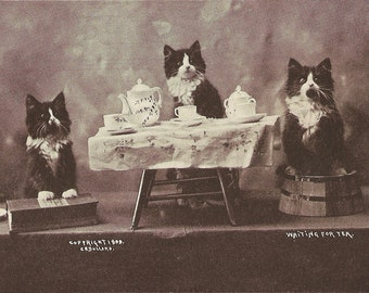 Tuxedo Kittens Cats DIGITAL PRINTABLE Vintage Postcard Cats Tea Party Printable Instant Download Digital Art DIY Card Making Collage Art