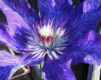 Clematis 3 Limited Edition Print