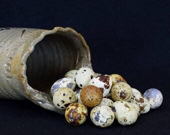 20 Empty Quail Eggs for Sale