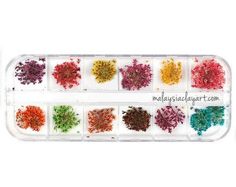 12 Natural Dried Flowers Set
