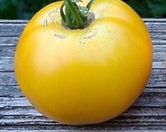 "Old heirloom, ""Goldie Tomato"" 15+ seeds"