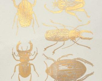 Large Scarab Beetles Ceramic Decals, Glass Decals or Enamel Decals