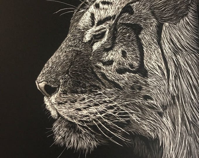 Pensive Tiger scratchboard 5x7 inches