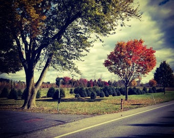 Driving Home in the Fall