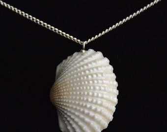 Shell Necklace - Broad Ribbed Carditid