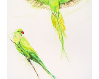 A4 Limited Edition archival giclee print from original watercolour/watercolour ink painting drawing. Green parrots Brazil