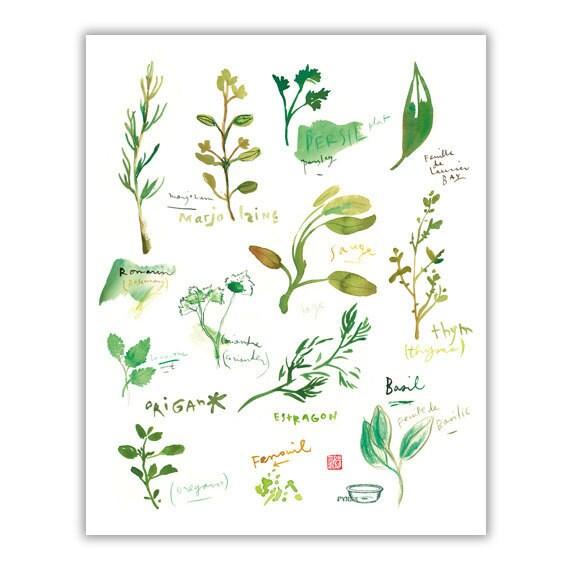 Herbes aromatiques dans la cuisine aquarelle affiche - Herbes aromatiques cuisine liste ...