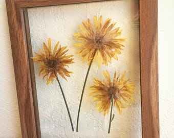 """pressed yellow flower grouping // 9""""x7"""" natural wood frame [#1011]"""