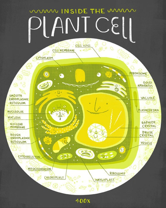 Inside The Plant Cell Anatomy Poster