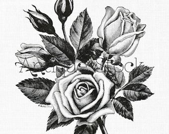 Flowers Clipart 'Tea Roses' Digital Download PNG Image for Scrapbook, Wall Art, Collages, Paper Crafts, Cards, Invites...