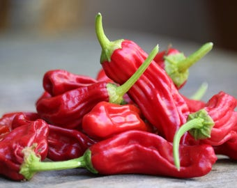 Sweet Pepperoncini Chilli Peppers for vegetable gardens, organic seeds, chili pepper seeds
