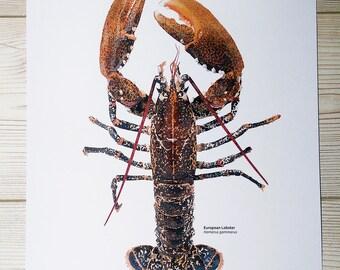 Digital Lobster print, Lobster illustration, Coastal print, Various sizes