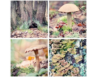 Woodland Wall Art, Nature Photography Print Set, Nature Wall Art Set, Forest Photography, Nature Photography Set
