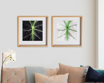 Nature 2C Print Collection.  Detail photography, Black Alocasia plant, wall art, artwork, large format photo.