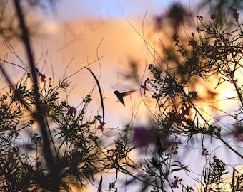 Hummingbird Photo on Canvas