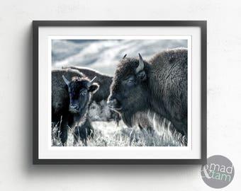 Bison Print, Bison Art, Buffalo Wall Art, Animal Wall Art, Animal Prints, PRINTABLE ART, Bison Photography, Bison Wall Art, Animal Decor