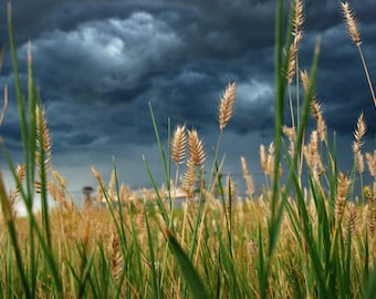 Heading Toward the Storm - landscape photograph - nature dark sky clouds art photo grass field stormy