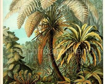 antique palm trees felicinae ferns illustration ernst haeckel digital download