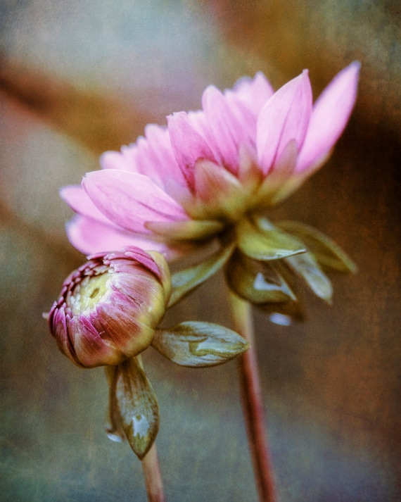 "Metal Art Print ""Romance IV"", Flower Photography Printed on Aluminum with Flush Frame, 16x20, Special Order"
