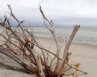 Beach Art Print, Nature Photography Landscape Ocean Beach Decor Beach Art Outer Banks Driftwood Coastal Decor Beach Wall Art