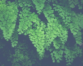 nature photography, fern photography, forest art, woodland photography, nature print, romantic art, maidens hair, fine art photography,